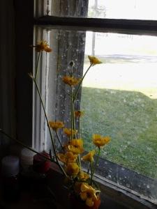 Flowers in a windowsill Greensboro, NC 2013 Copyright Melanie Arrowood Wilcox