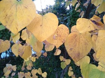 Autumn Leaves Spencer-Love Tennis Center; Greensboro NC 2013